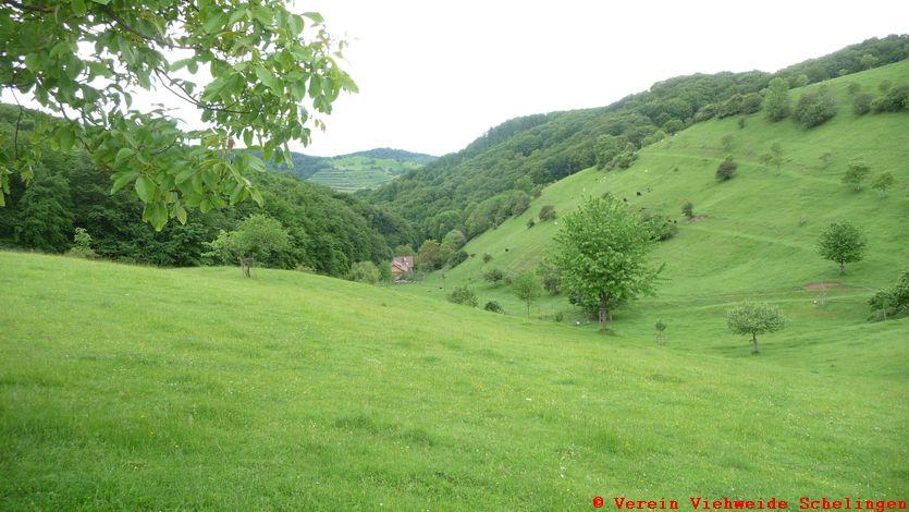 das Hessental auf der Viehweide in Schelingen