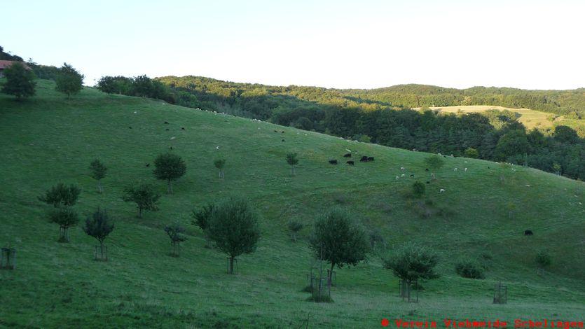 das Schwalbental auf der Viehweide Schelingen